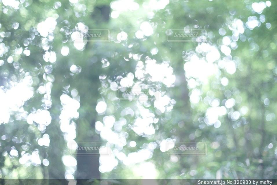 自然の写真・画像素材[120980]