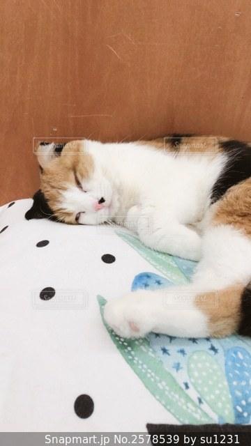 半目の猫の写真・画像素材[2578539]