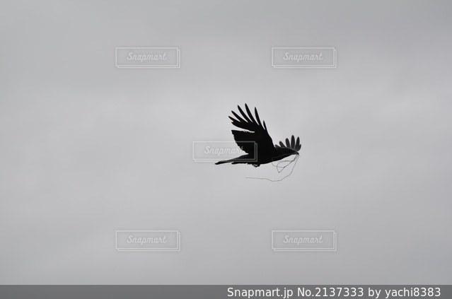 曇りの日に空中を飛んでいる鳥の写真・画像素材[2137333]