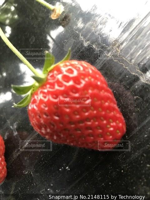 食べ物の写真・画像素材[2148115]