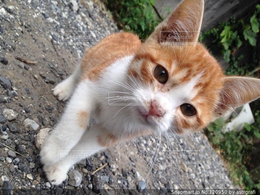 猫が好きの写真・画像素材[120950]