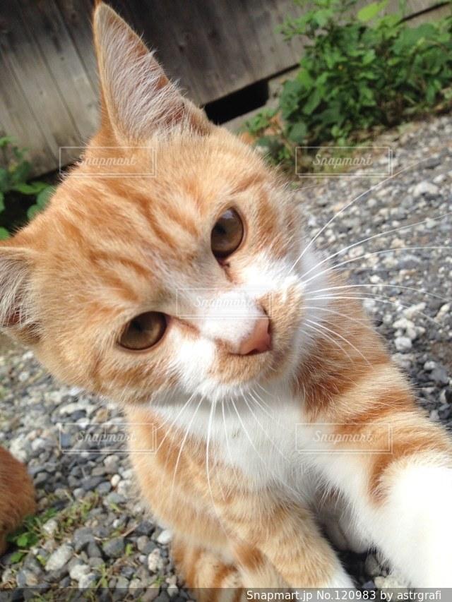 猫三昧の写真・画像素材[120983]