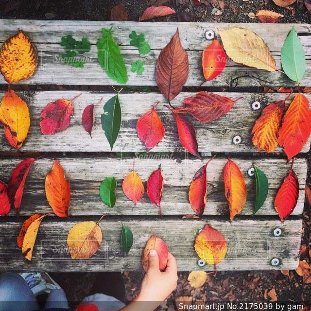 ベンチの上の紅葉した落ち葉の写真・画像素材[2175039]