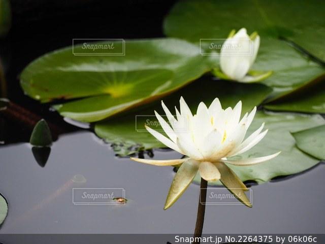 池のクローズアップの写真・画像素材[2264375]