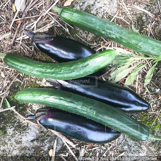 夏野菜 収穫の写真・画像素材[2192859]