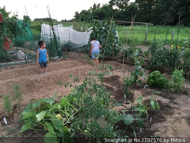 お庭の畑の写真・画像素材[2207576]