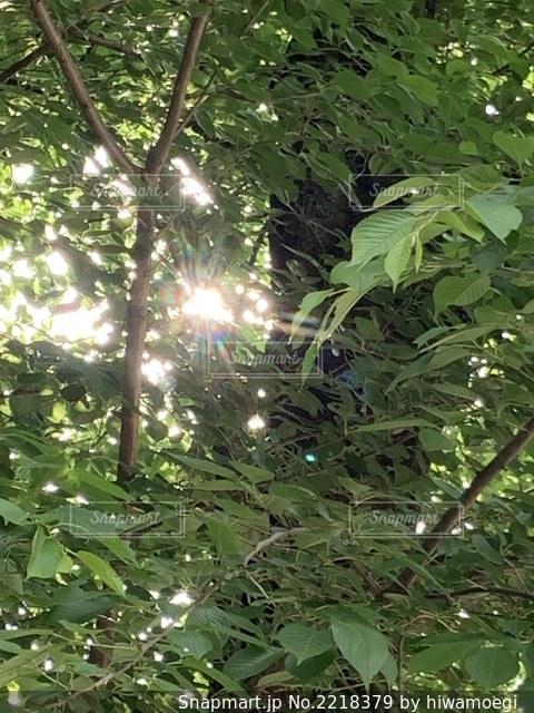 葉桜と木漏れ日の写真・画像素材[2218379]