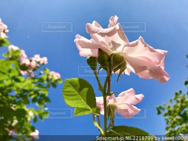 花のクローズアップの写真・画像素材[2218799]
