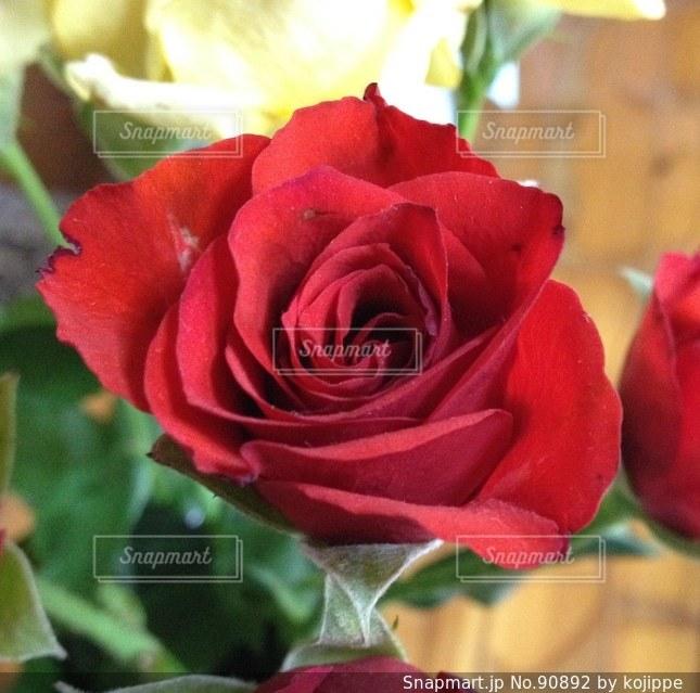 真っ赤なバラのプレゼント。花のアレンジメントの中のバラ。の写真・画像素材[90892]