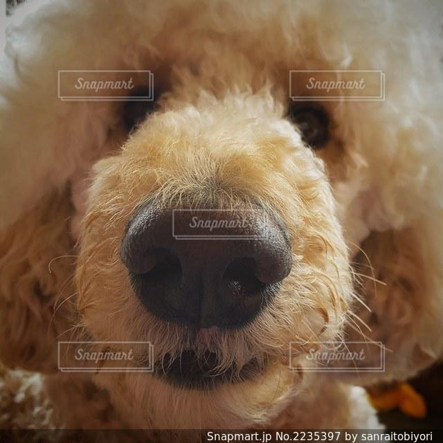 愛犬のえがおの写真・画像素材[2235397]
