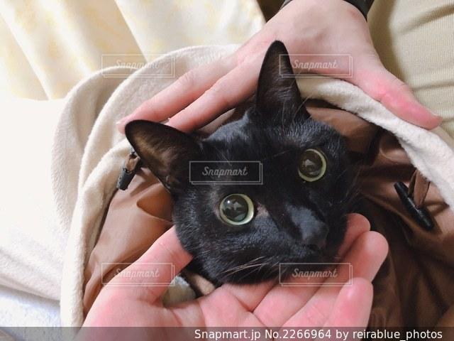 猫を抱いている人の写真・画像素材[2266964]