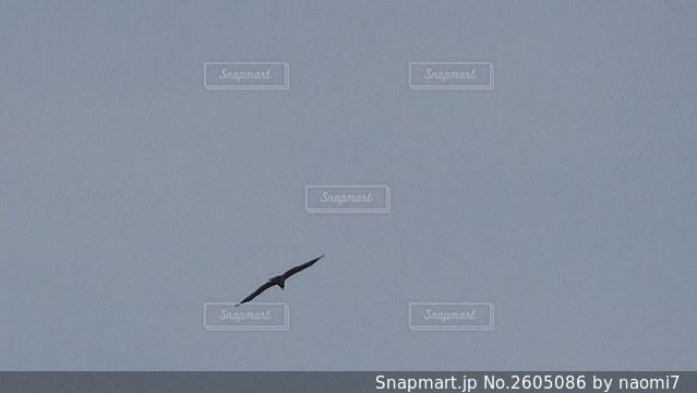 空飛ぶ鳥の写真・画像素材[2605086]
