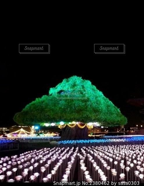 巨大樹木のイルミネーションの写真・画像素材[2380462]