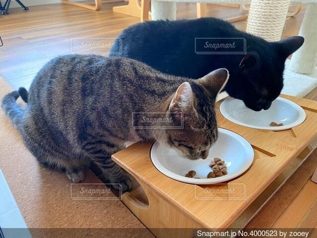 並んでごはんを食べる二匹の猫の写真・画像素材[4000523]
