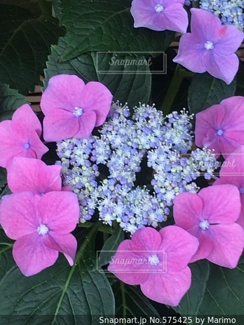 花の写真・画像素材[575425]