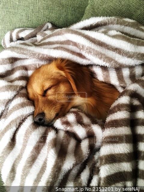 眠る犬の写真・画像素材[2351201]