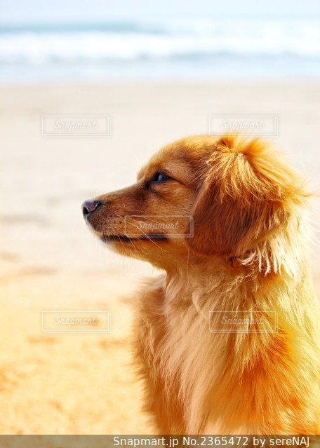 浜辺の犬の写真・画像素材[2365472]