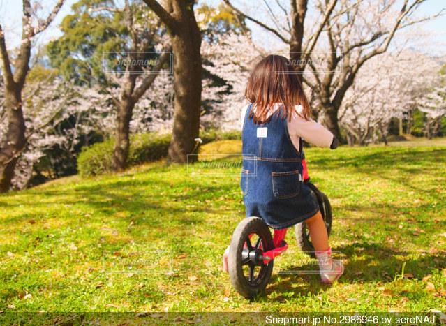 桜と女の子の後ろ姿の写真・画像素材[2986946]