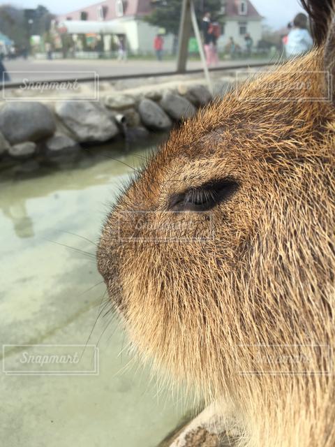 動物の写真・画像素材[121472]