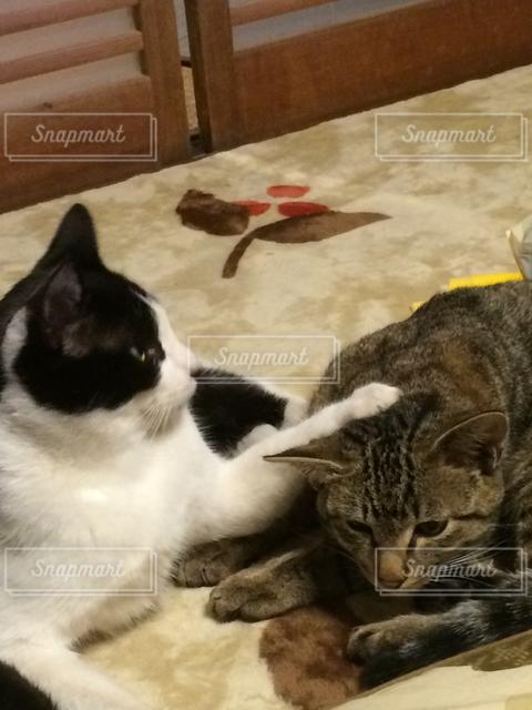 猫の写真・画像素材[121478]