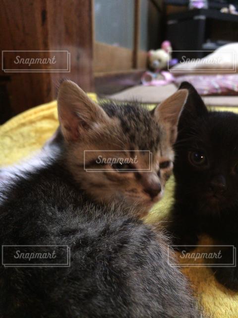猫の写真・画像素材[121484]