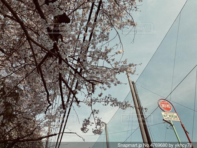 お花見日和の写真・画像素材[4769680]