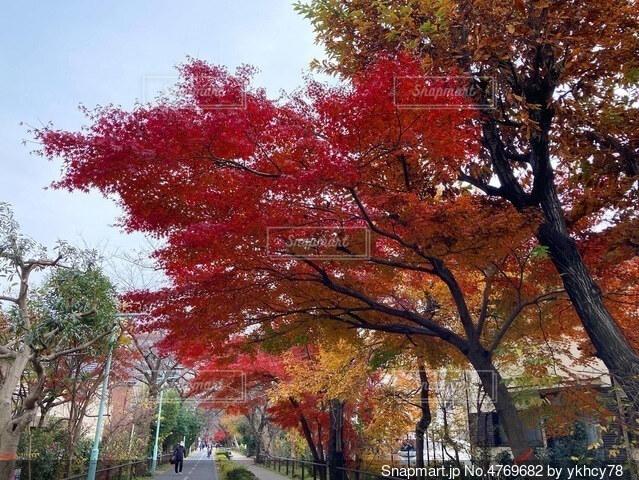 紅葉の写真・画像素材[4769682]