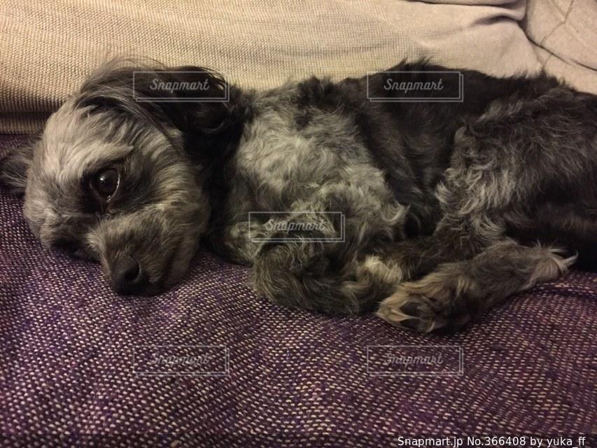 犬の写真・画像素材[366408]