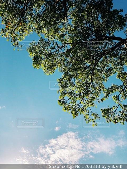 近くの木のアップの写真・画像素材[1203313]