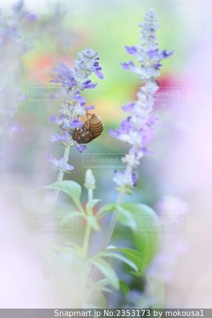 花のクローズアップの写真・画像素材[2353173]