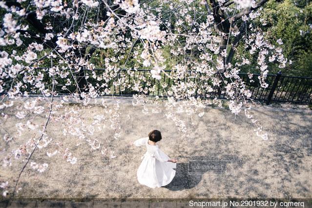 桜の下でダンスの写真・画像素材[2901932]
