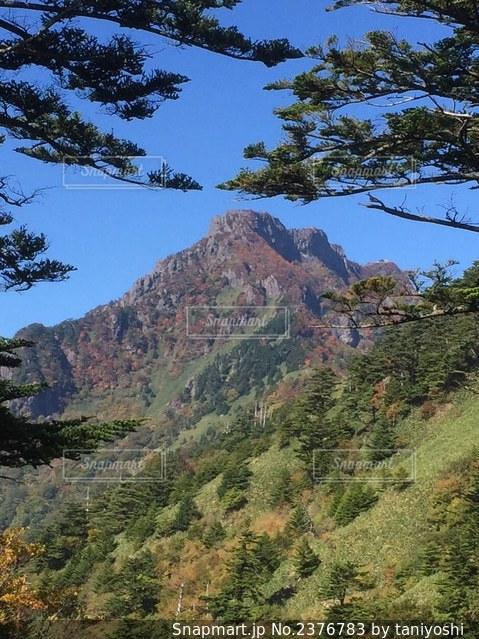背景に山がある木の写真・画像素材[2376783]
