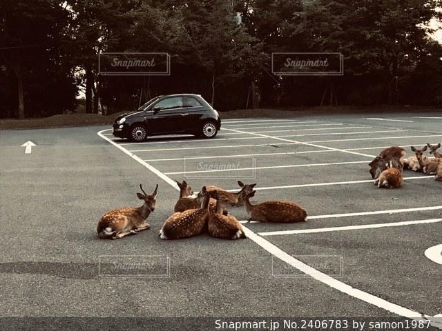 駐車場(鹿専用)?の写真・画像素材[2406783]