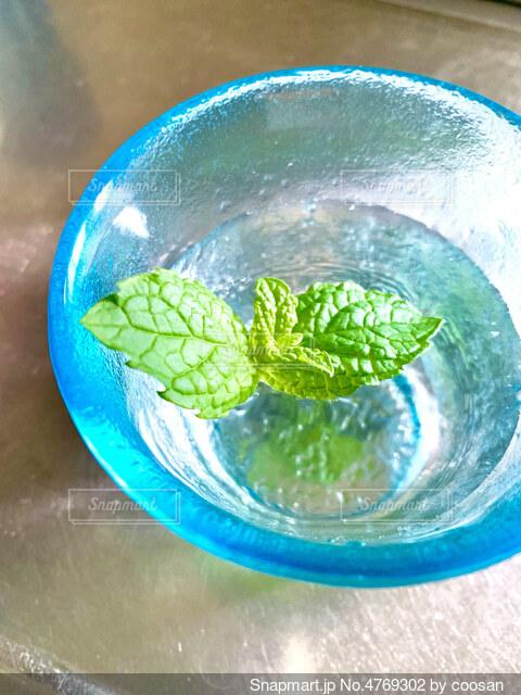 一杯のミント水。の写真・画像素材[4769302]
