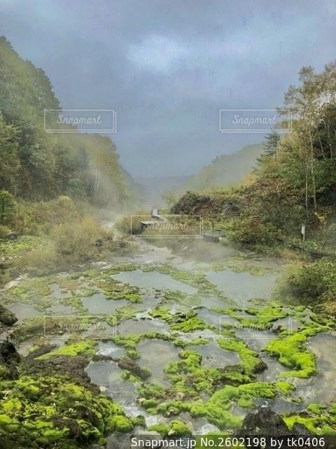 茶蕾苔の写真・画像素材[2602198]