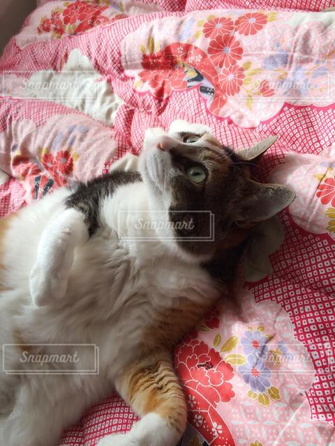 猫 - No.122379