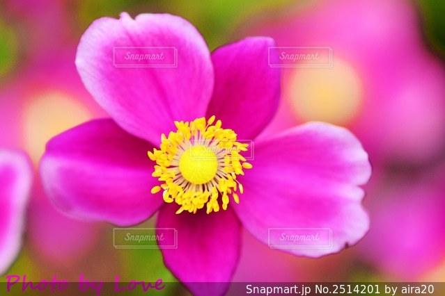花のクローズアップの写真・画像素材[2514201]