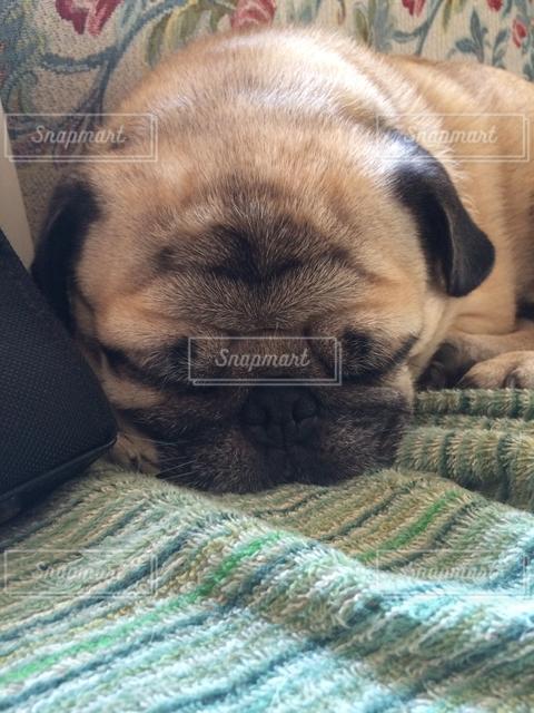 犬の写真・画像素材[129102]