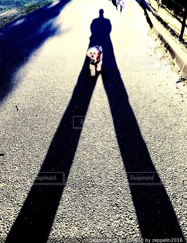 影の写真・画像素材[109810]