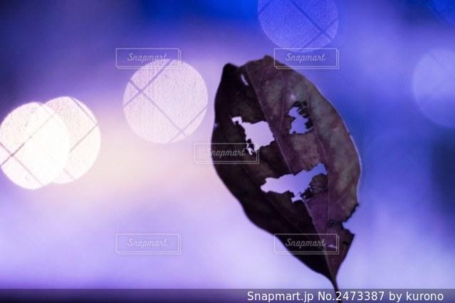 お化け落ち葉の写真・画像素材[2473387]