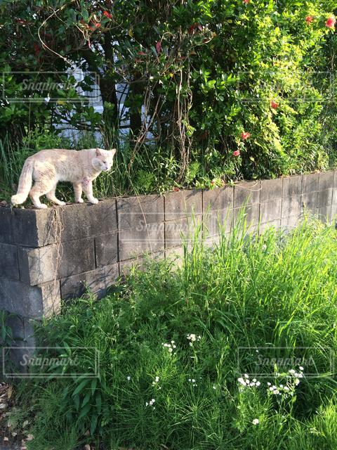 動物の写真・画像素材[121935]