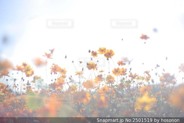 花畑の写真・画像素材[2501519]