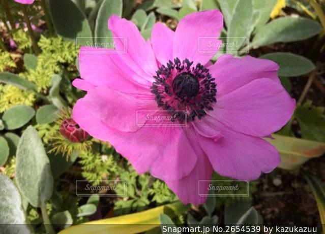 花の写真・画像素材[2654539]