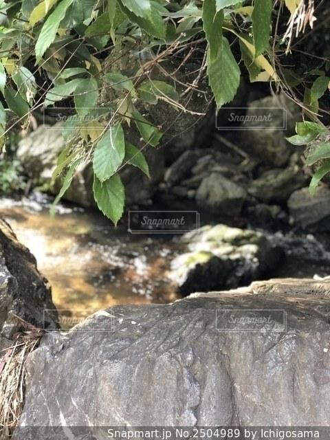 岩と森の写真・画像素材[2504989]