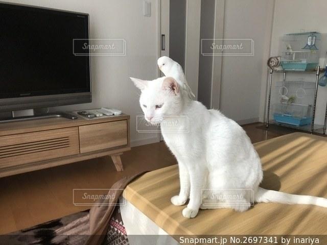 猫と鳥 仲良しの写真・画像素材[2697341]
