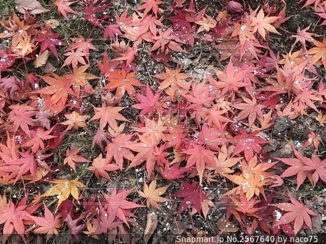 秋から冬への写真・画像素材[2567640]