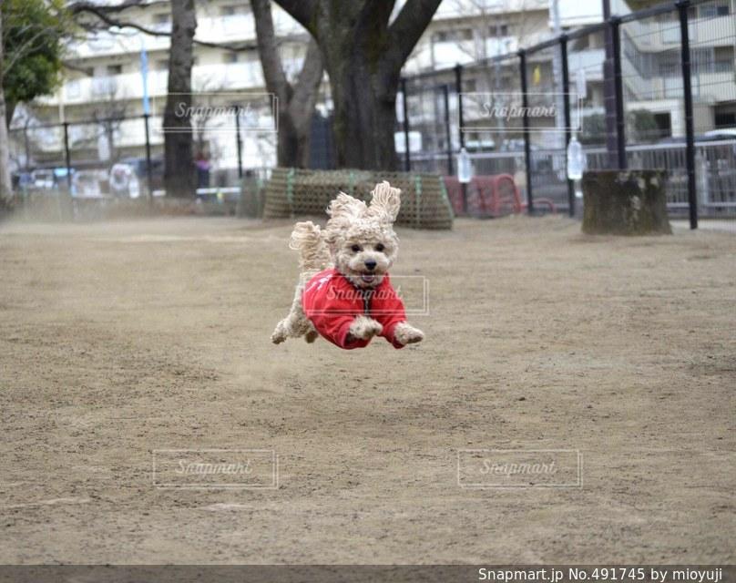 犬の写真・画像素材[491745]