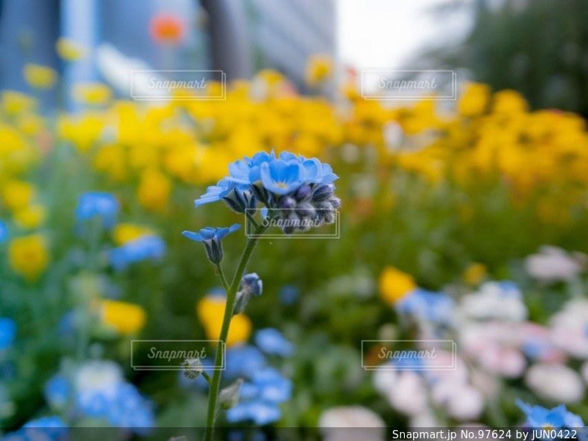 花の写真・画像素材[97624]