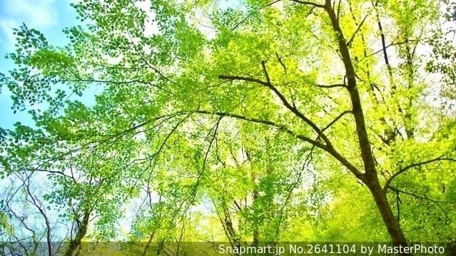 木漏れ日の写真・画像素材[2641104]