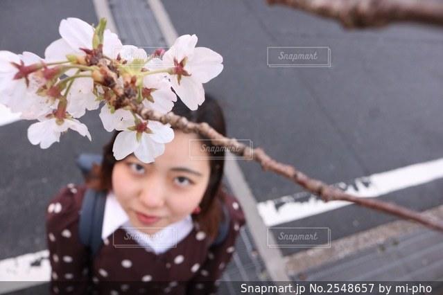花を見上げる人の写真・画像素材[2548657]